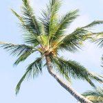 Cocooil-tropics